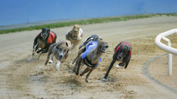 London's last greyhound track is closing