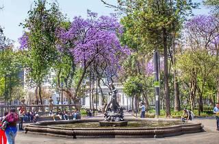 Jacarandas en la Alameda Central