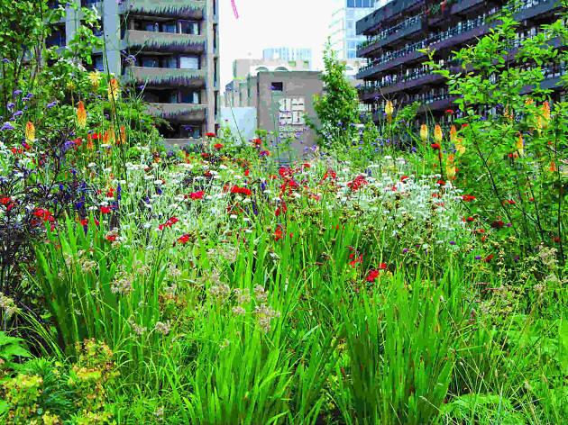 Beech Gardens Barbican Centre