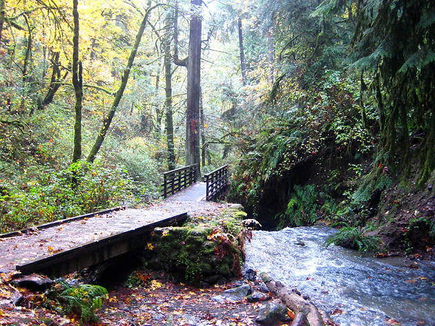 Wildwood Trail, Portland, Oregon
