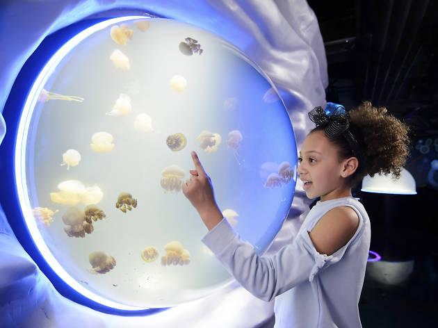 Ocean Invaders at SEA LIFE London Aquarium, jellyfish