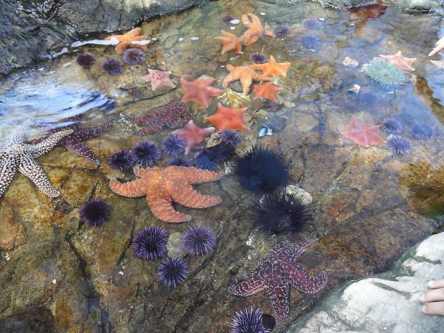 Cabrillo Marine Aquarium Attractions