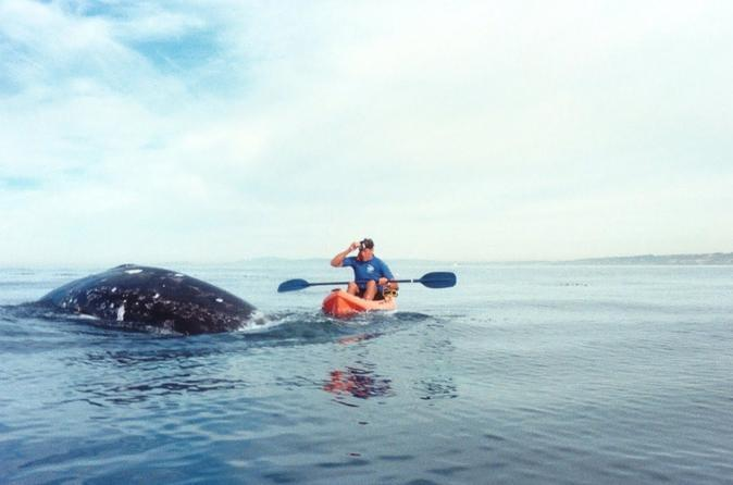 Whale Watching Kayak Adventure