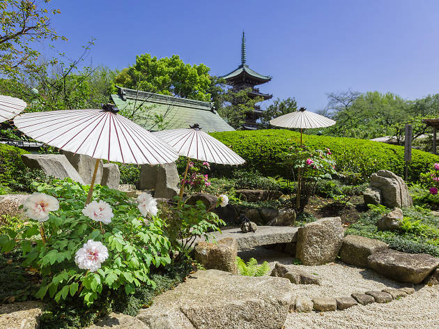 Ueno Toshogu Spring Peony Festival