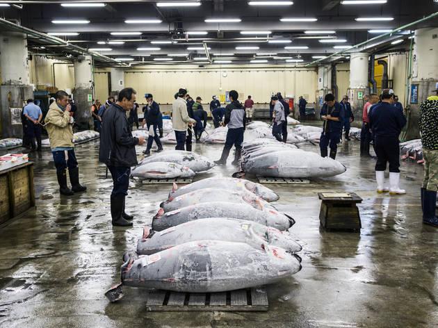 Witness the tuna auction at Tsukiji fish market