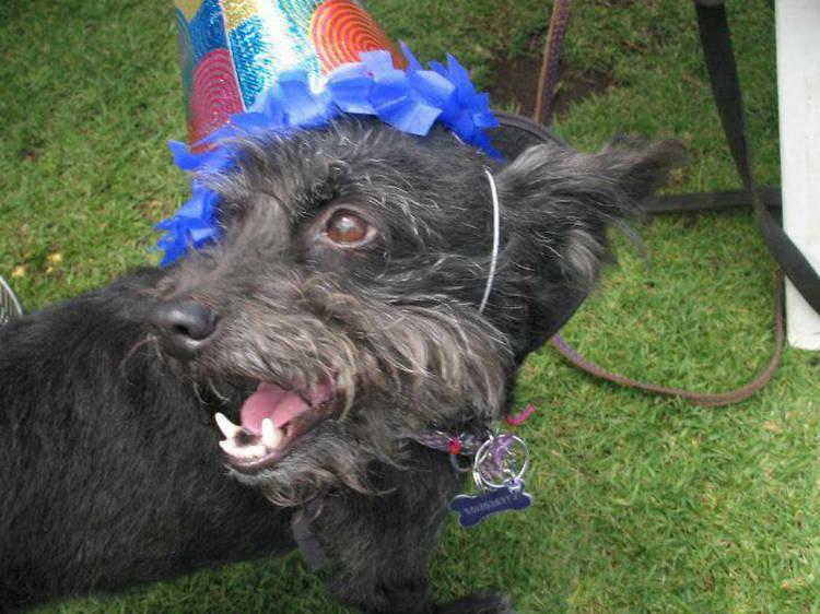 Streeters pastelería para perros