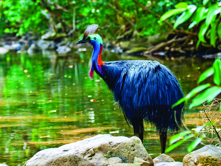 Get up close to the tropical wildlife