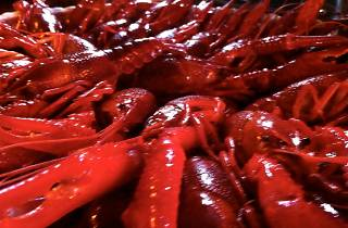 Black Star Co-Op Crawfish Boil