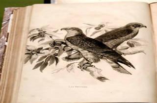 (Foto: Cortesía Museo Nacional de la Estampa)