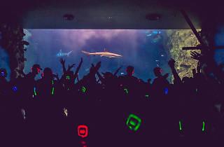 Silent Disco At Melbourne Aquarium