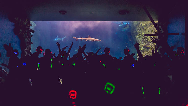 Silent Disco At Melbourne Aquarium