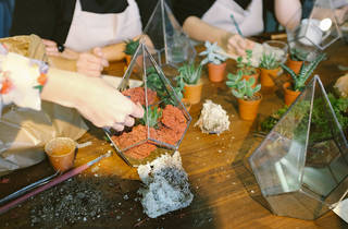 Making terrariums