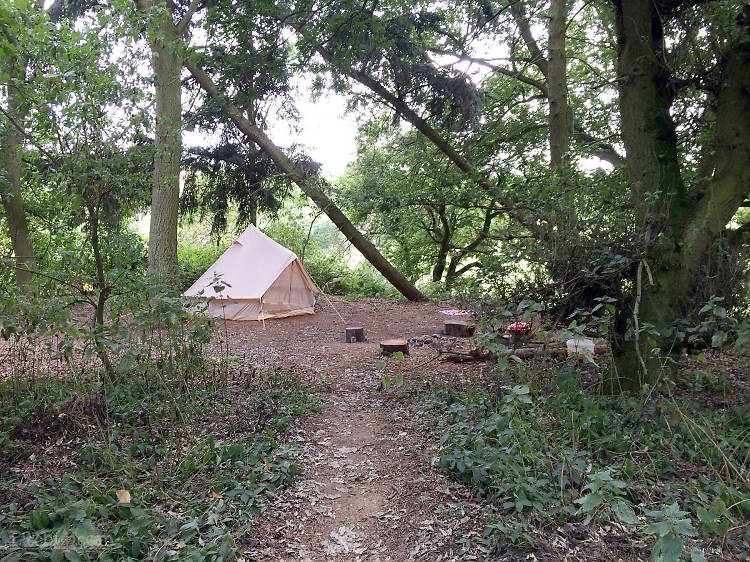 Little Ropers Woodland Camping, Suffolk