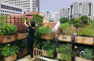 Urban Gardening with The Hive