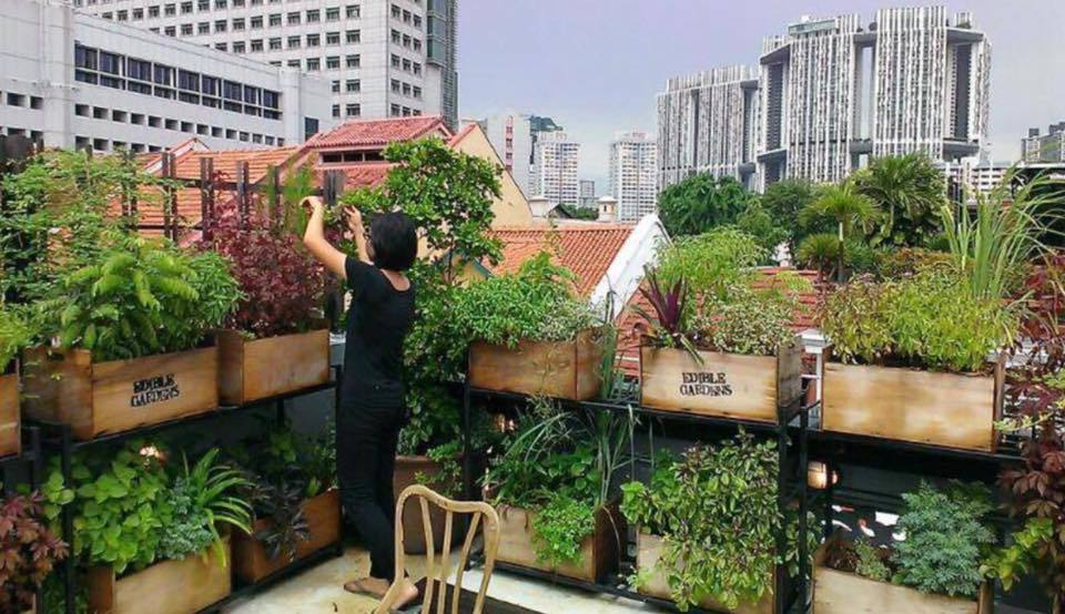 urban gardening with the hive things to do in kuala lumpur. Black Bedroom Furniture Sets. Home Design Ideas