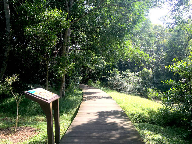 Pasir Ris Mangrove Boardwalk Trail