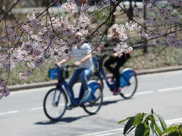 You can ride a Citi Bike for free on Saturday
