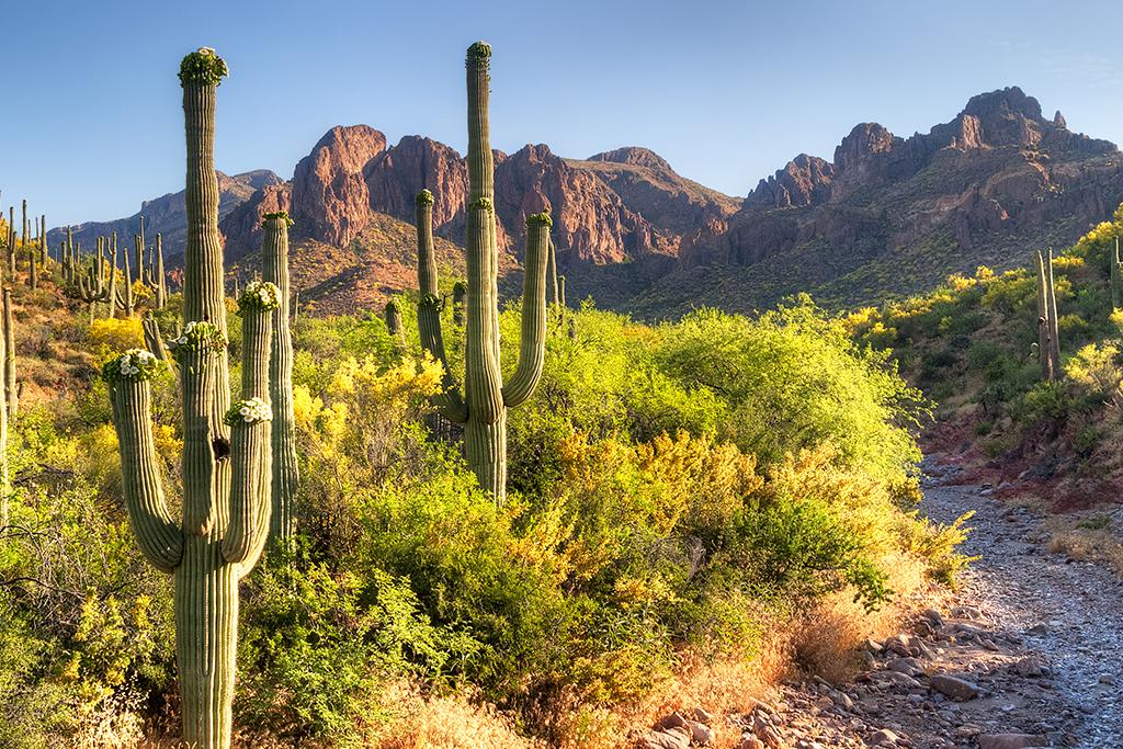Sonoran Desert