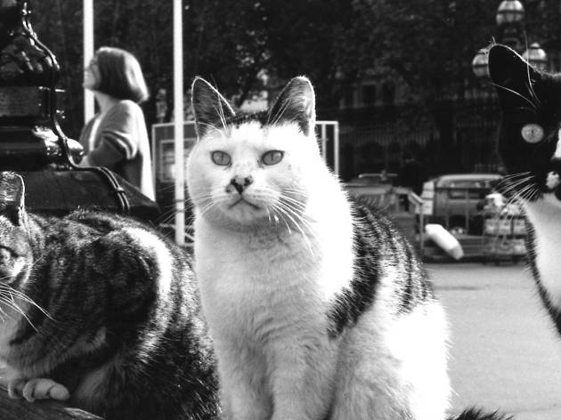 Did you know that the British Museum used to have cats on its payroll?