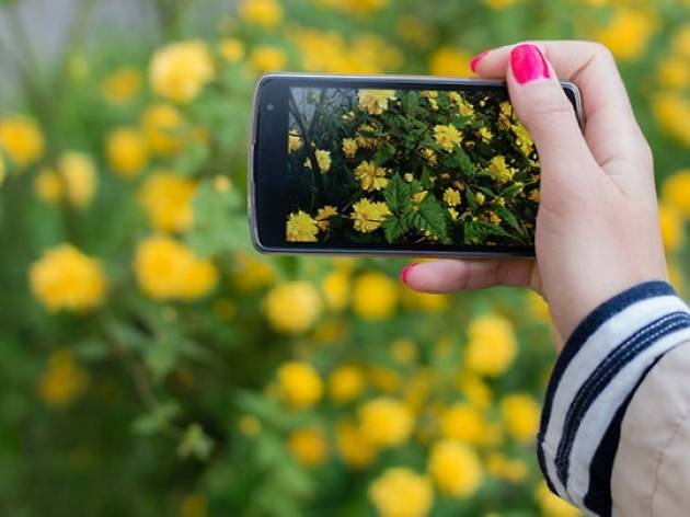 Mobile Photography onine course