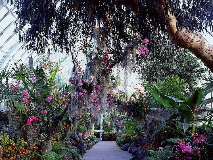 Admire the flora at the New York Botanical Garden