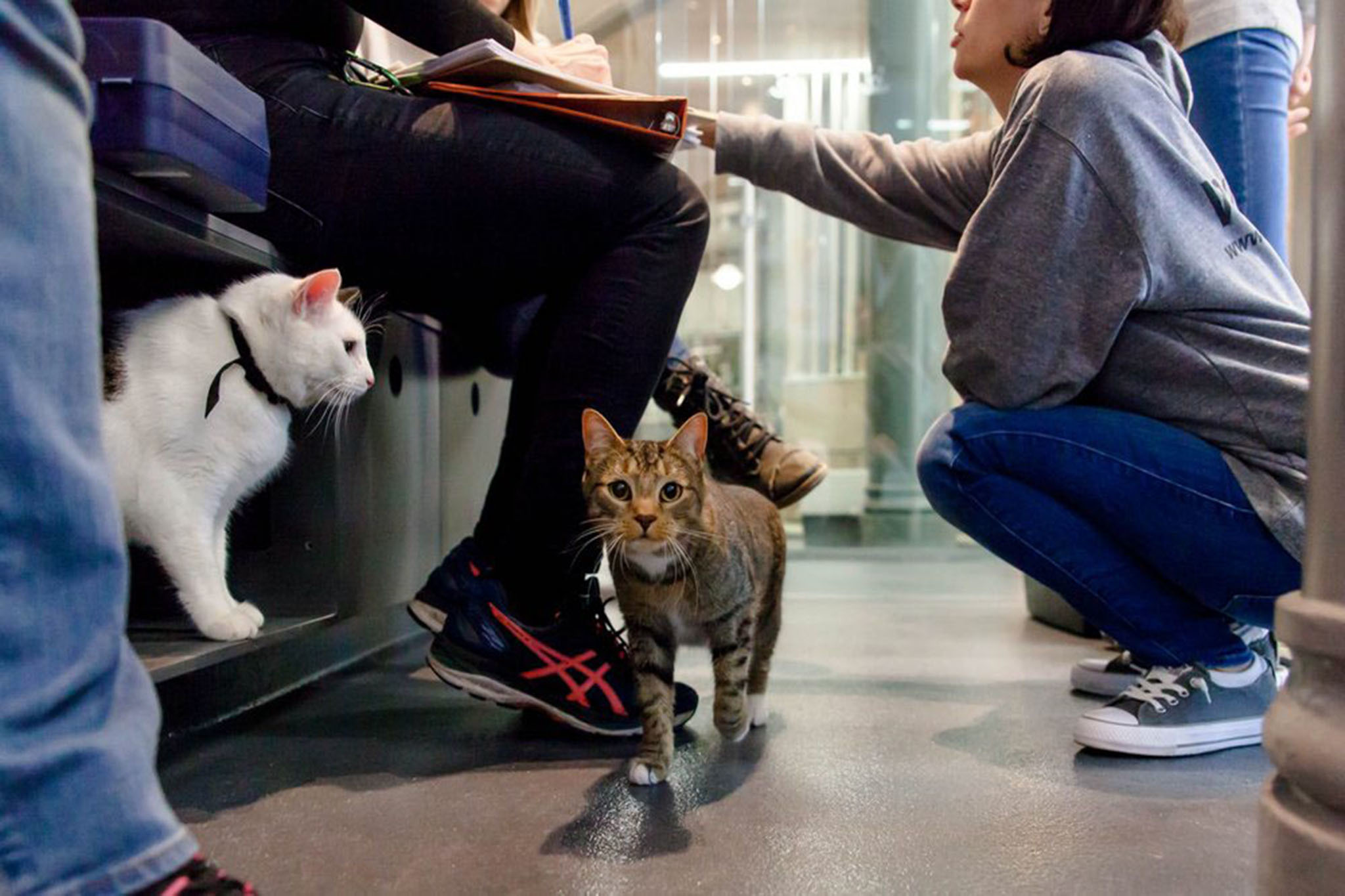 Best Places For Pet Adoption In Nyc Including Foster Centers