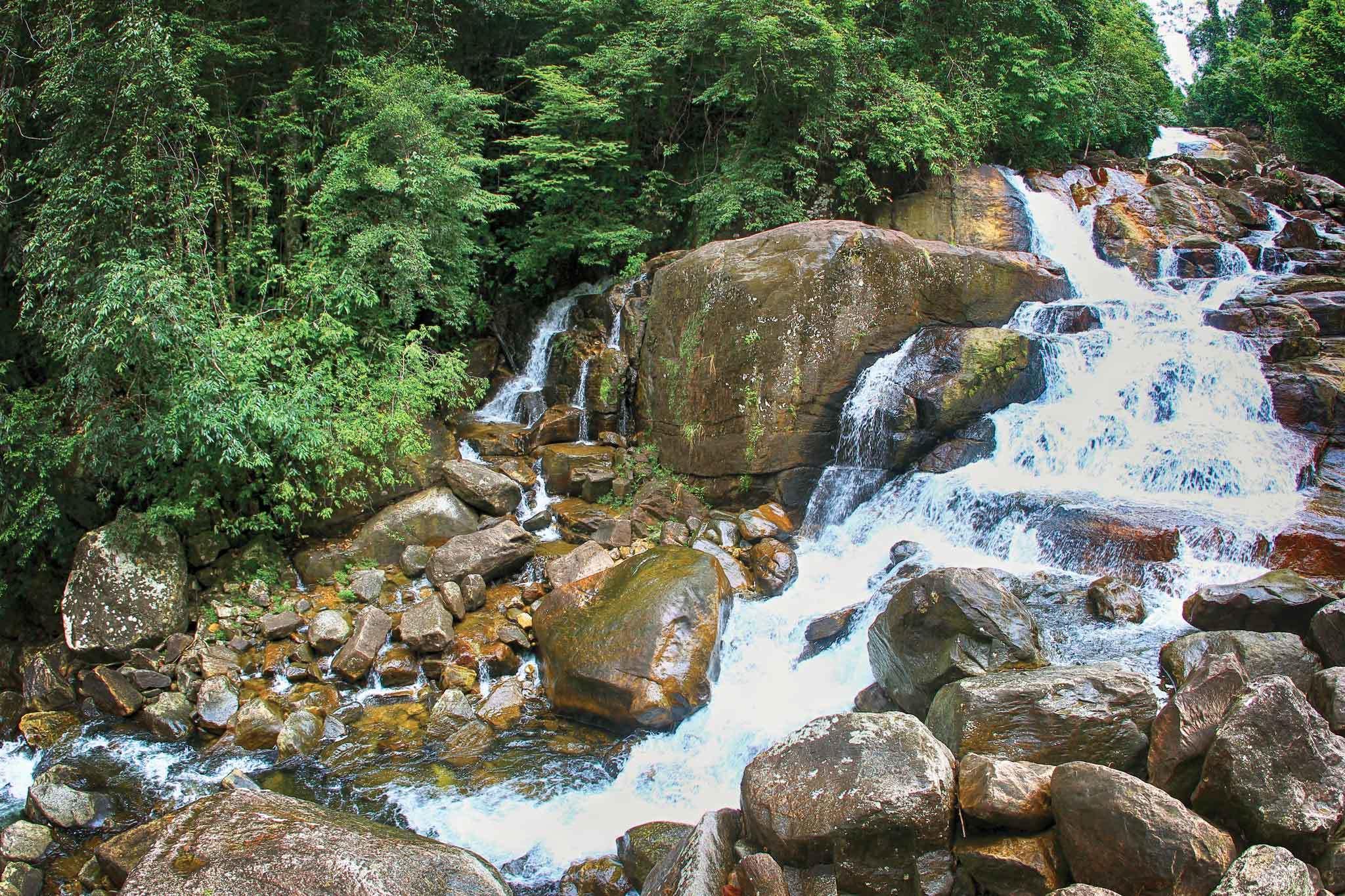 The fascinating biodiversity of Sinharaja