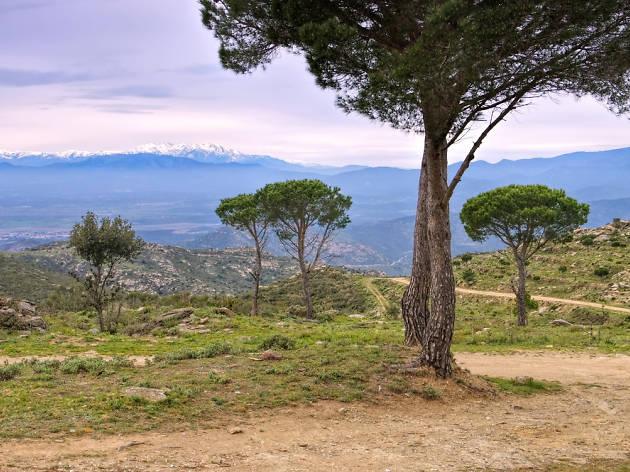 Serra de l'Albera
