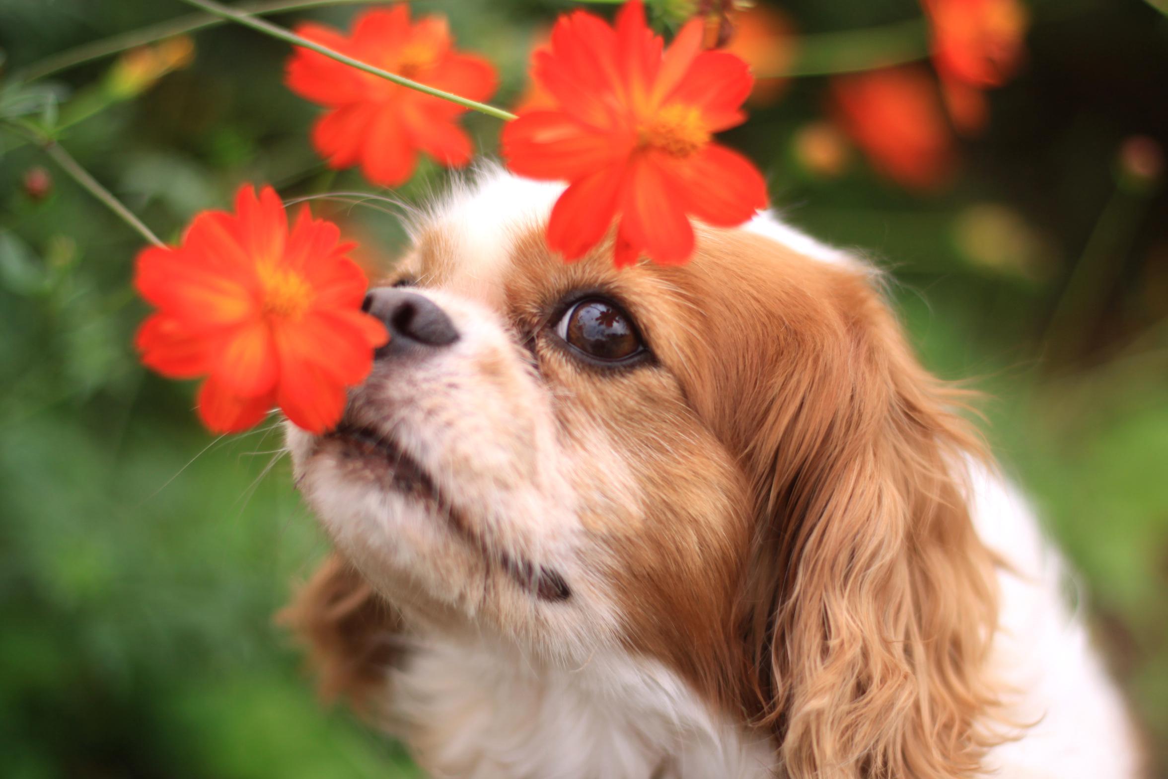 Pasarela canina