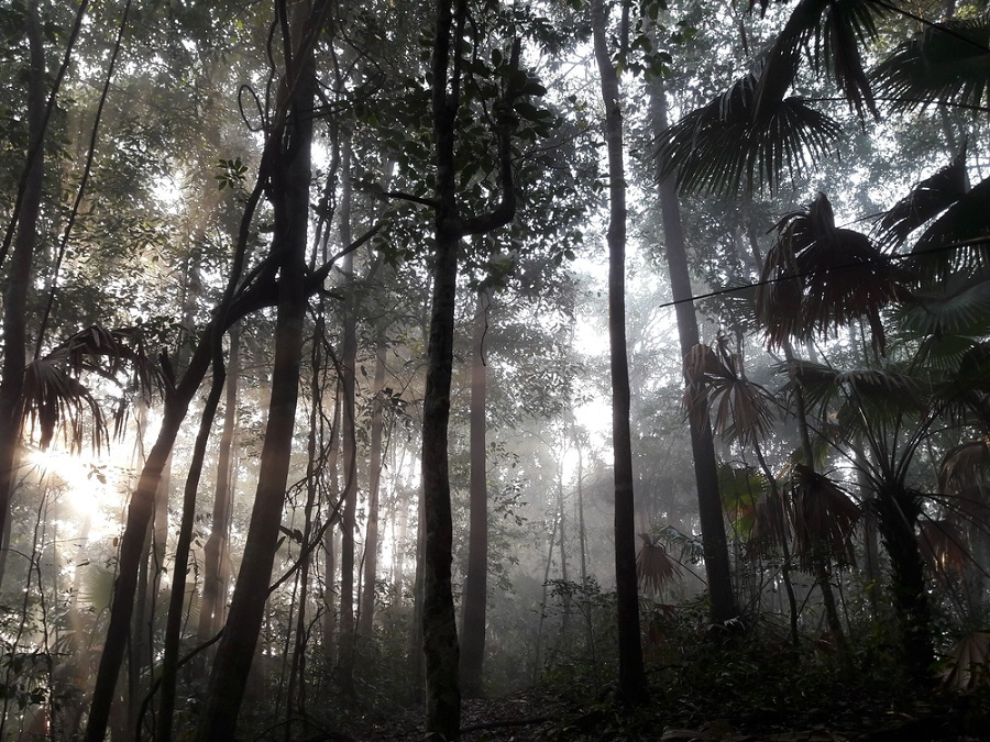 La selva del Congo