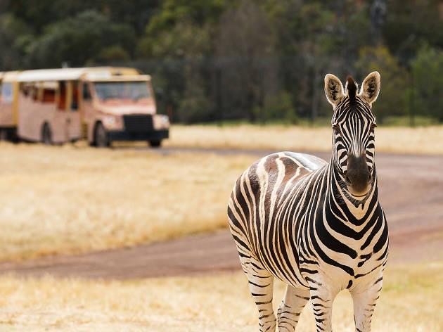 Take a free safari tour