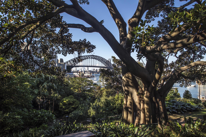 You can now take a virtual tour of Wendy Whiteley's secret garden