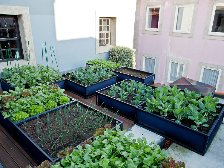 Visit chef Pedro Lemos's organic garden