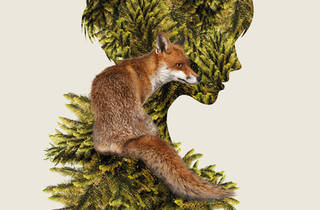 Cunning Little Vixen 2017 Victoria Opera hero image no text