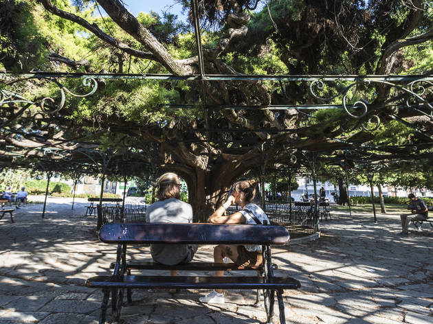 árvore do jardim do principe real