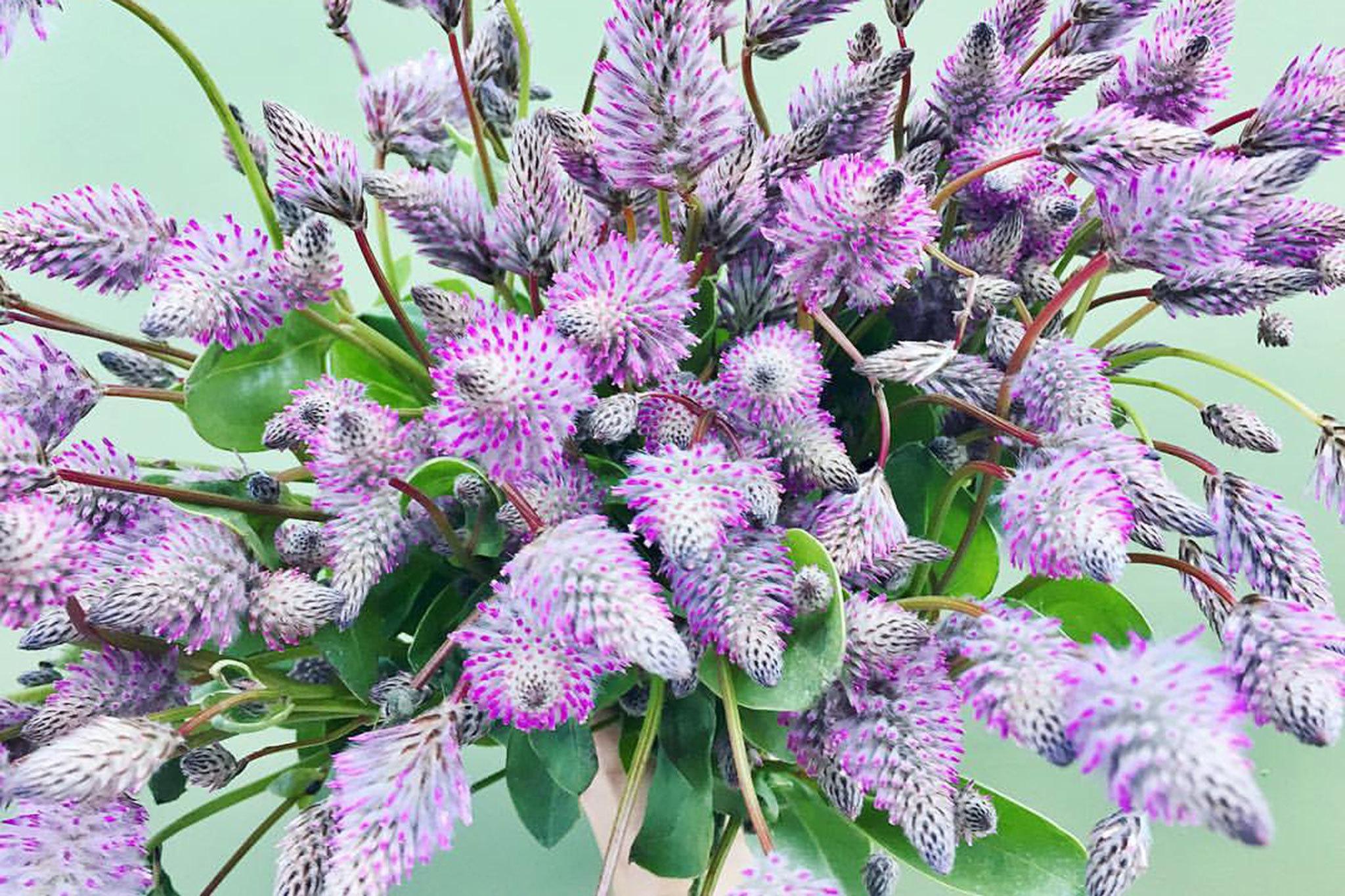 Austin Flower Co.