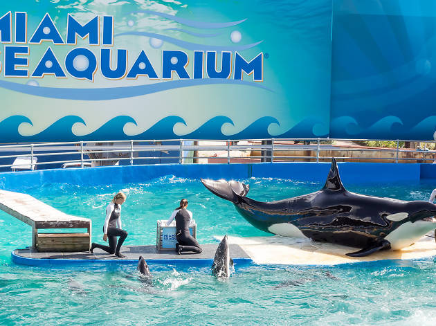 Splash around at Miami Seaquarium
