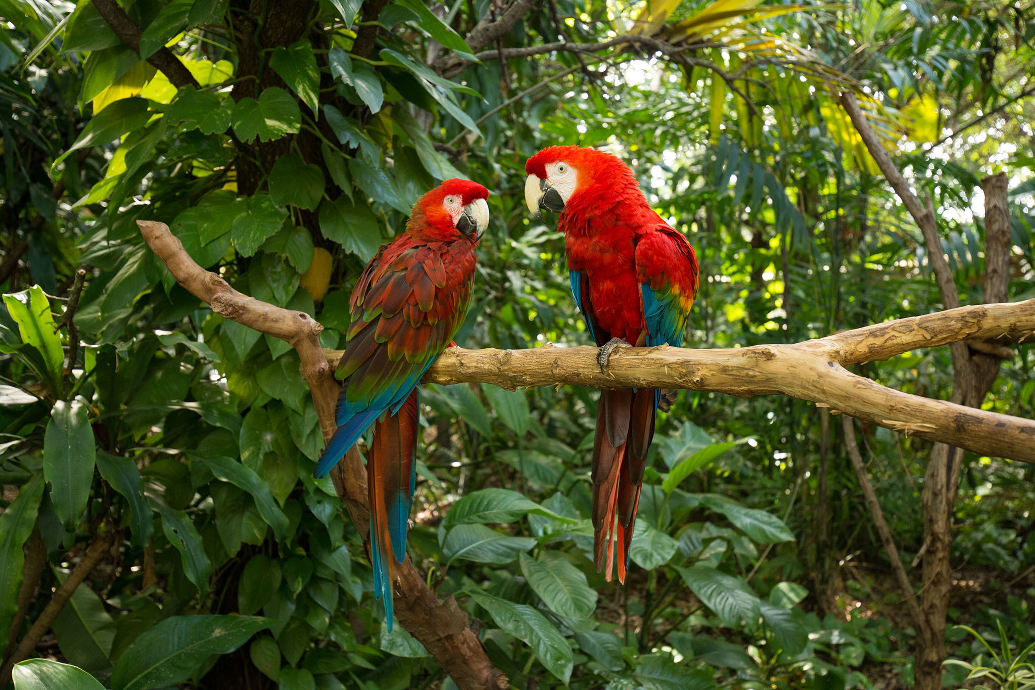 Be one with the birds at Jungle Island