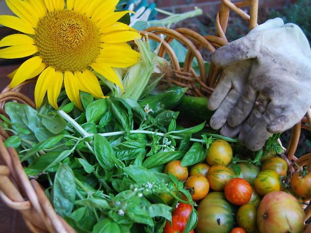 Docklands Harvest Festival