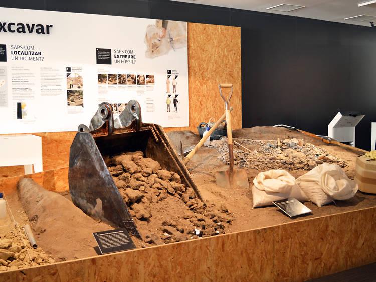El Museu de Paleontologia de Sabadell: entre fósiles y esqueletos