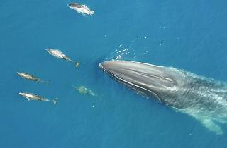 balena i dofins a barcelona
