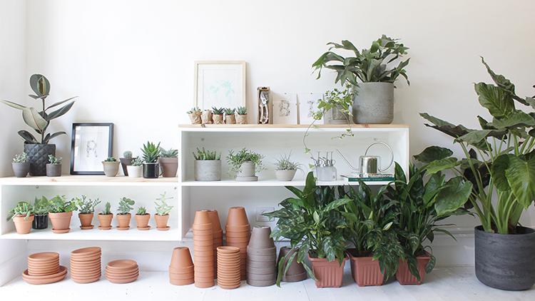 We Love Plants