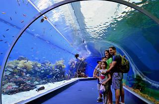 Underwater Observatory Eilat