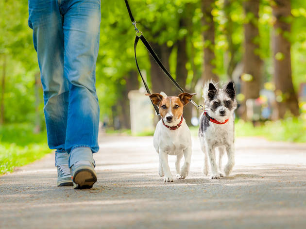 Chilandog, el festival dedicado al cuidado responsable de las mascotas