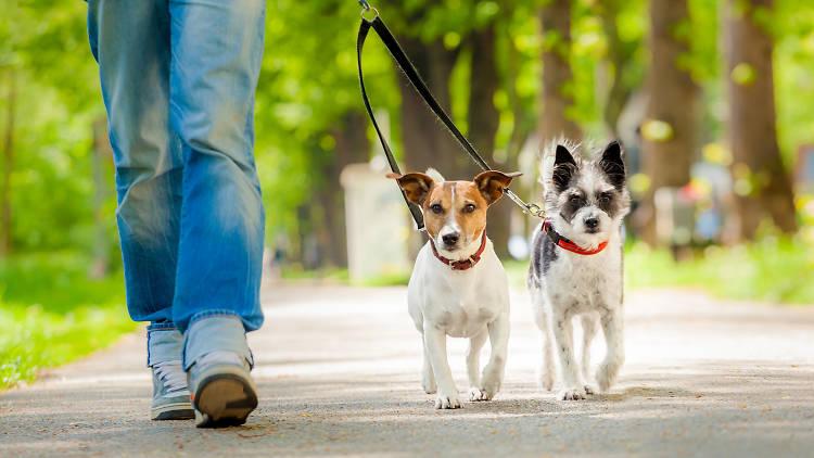 Parques para pasear a tu perro