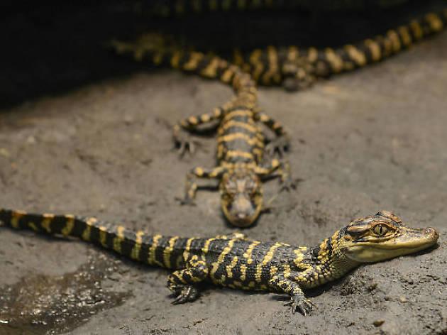 Expo Reptiles, Artrópodos y Anfibios