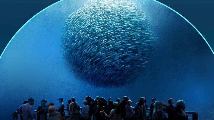 Go under the sea with National Geographic Encounter (New in 2017!)