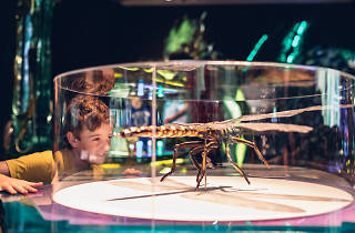 Young boy looking at dragonfly exhibit