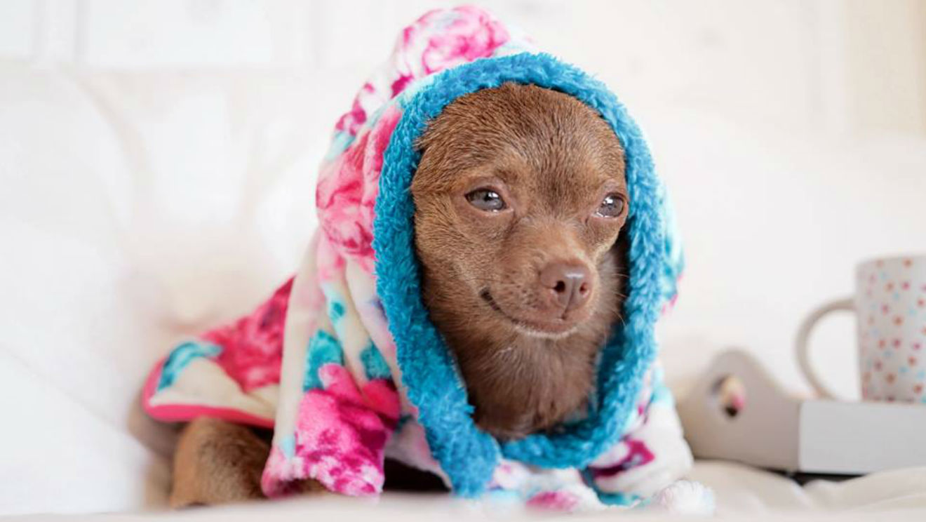 Tiendas online de artículos para tu mascota