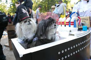 Desfile y croquetón por el bienestar animal